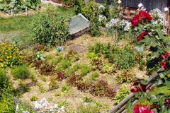 Zeleninové záhony na záhrade sa mulčujú slamou a pokosenou trávou. Netreba tak toľko zalievať a plieť