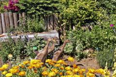 """Kačice indické bežce pomáhajú majiteľom záhrady v """"boji"""" s premnoženými slizniakmi"""
