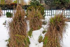 Niektoré citlivejšie trávy potrebujú na zimu ochranu pred mrazom a vlhkom. Zviazaním ich trsov vzniknú v snehom pokrytej záhrade zaujímavé prvky