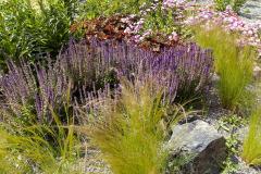 Záhradu zdobí skupina modro kvitnúcej veroniky s okrasnou trávou kavyľ  v popredí