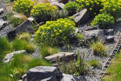 Trvalkovému záhonu s kameňmi dominuje výsadba mliečnika mnohofarebného