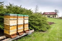 Medonosným včelám poskytujú bohatú pastvu rôznorodé domáce a šľachtené dreviny, trvalky v záhonoch aj trávnik s rozkvitnutými púpavami