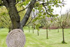 Pôvodné stromy v ovocnom sade nechávajú majitelia dožiť a postupne ich dopĺňajú novými odrodami. Úroda bude o to bohatšia