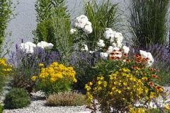 Svetlá stena domu vytvára dokonalé pozadie pre okrasné trávy, ruže s bielymi kvetmi, levandule a fialovo kvitnúcu liatru. Záhon oživujú oranžové kvety kokardy, žlto rozkvitnuté krásnoočká a rozchodník odrody 'Purpurteppich'. V popredí rastie pupalka