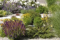 Štrkový mulč funguje čiastočne aj ako slnečná pasca. Okrem šalvie sa tu darí skalníku vodorovnému, ktorý sa na jeseň pekne vyfarbí a vytvára červené plody