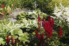 Hosty a astilby patria k tieňomilným rastlinám, dopĺňajú výsadbu na tienistej predzáhradke