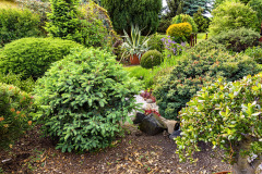 """Detail ukazuje pomerne pravidelne rastúcu odnož (""""čarovník"""") stromčeka. Všetky tieto dreviny sú vysadené na vyvýšenej terase z kameňov"""