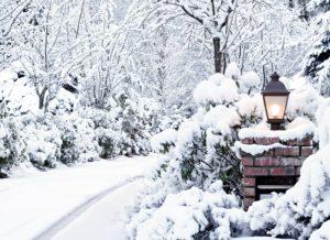 Poézia záhrady pod snehom
